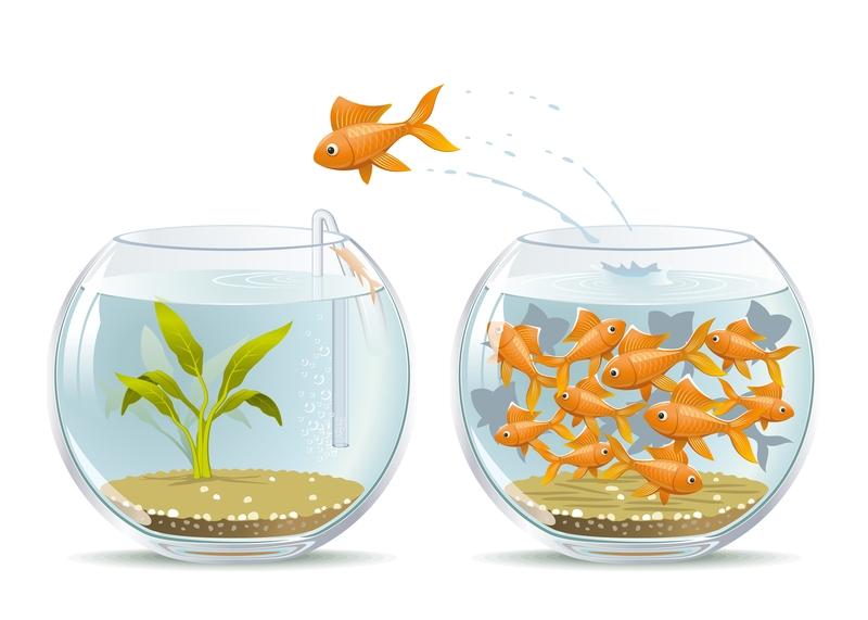 fish bowl. fish, characteristics of landing page that converts